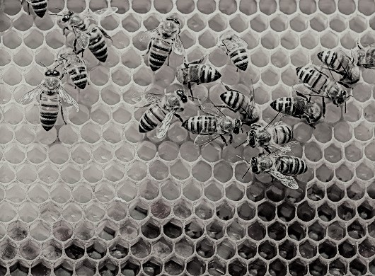 sweet lessons we can learn from bees